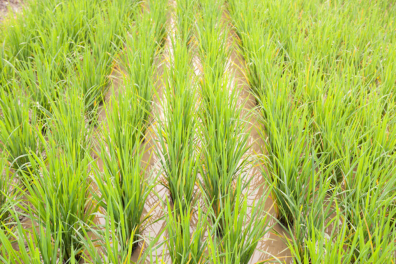 Arable crops