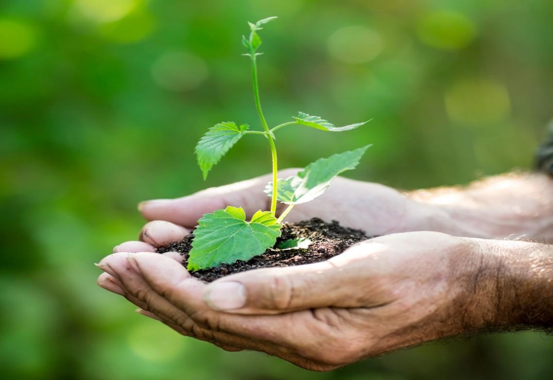 La innovación en azufre para uso agrícola como ejemplo de economía circular