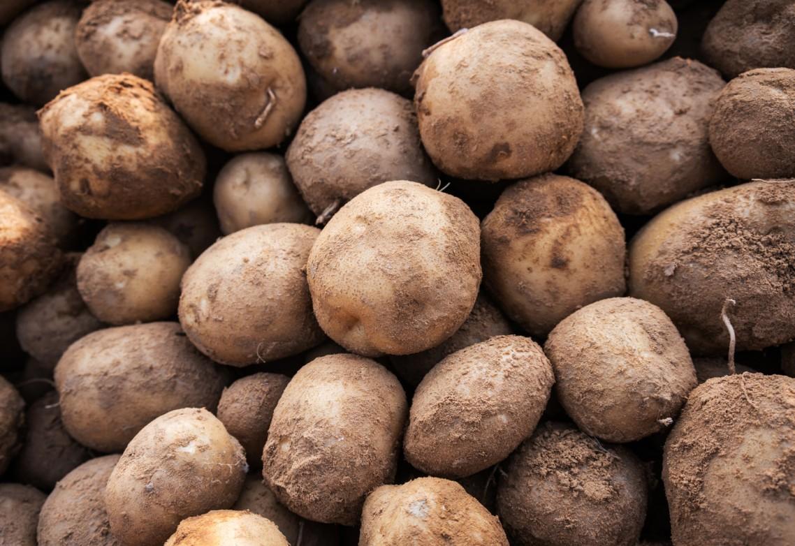El azufre para uso agrícola: ¿por qué es recomendable su uso como enmienda en el cultivo de patata?